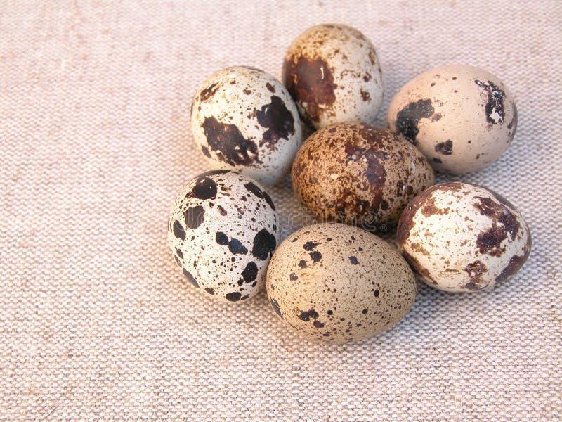 Download De eieren van kwartels stock foto. Afbeelding bestaande uit delicatesse - 276530