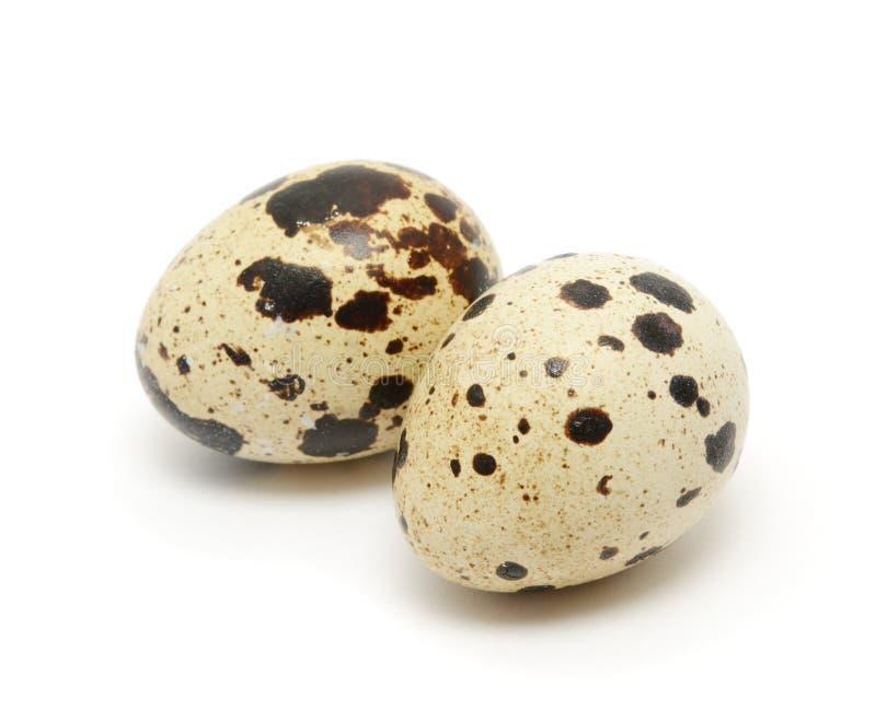 De eieren van kwartels royalty-vrije stock afbeelding