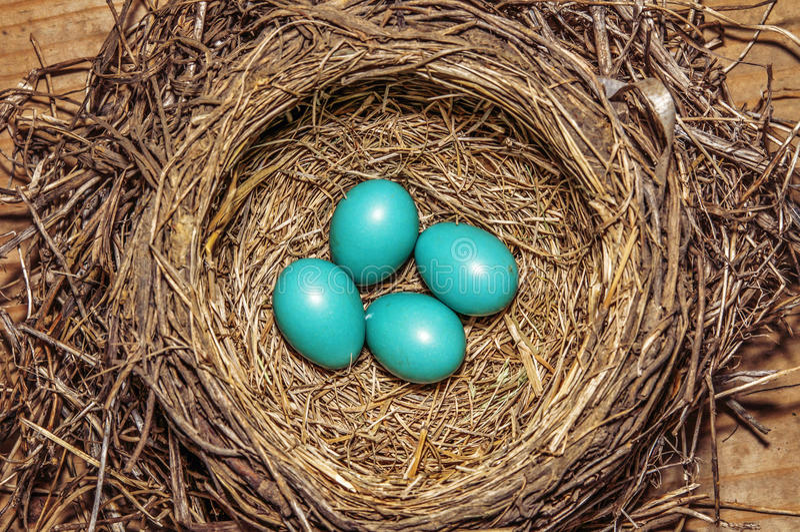 De eieren van Robin van het vogelnest stock fotografie