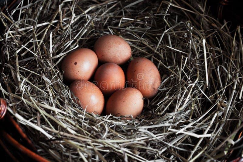 De eierenclose-up van de kip Natuurlijke ecologische eieren van bruine kleur in de kar met hooi Het Concept van Pasen stock foto's