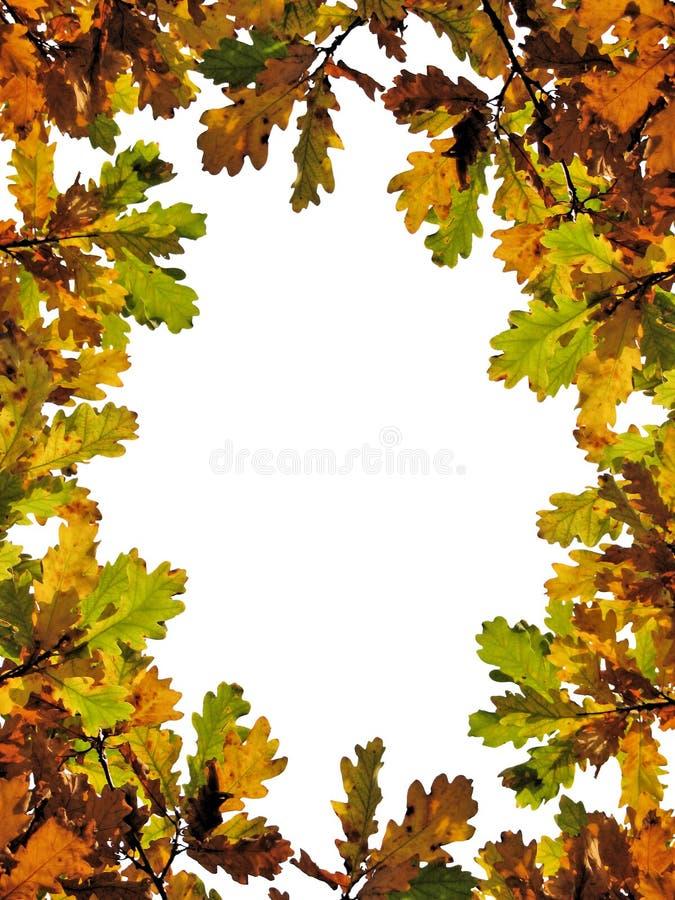De eiken bladeren van de daling stock afbeeldingen