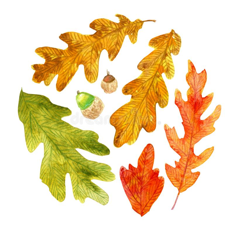De eiken bladeren van de waterverfherfst in een cirkelvorm stock illustratie