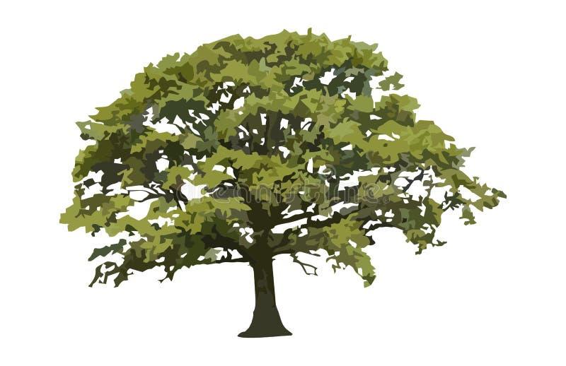 De Eiken Bomen van de zaagtandbeuk royalty-vrije illustratie