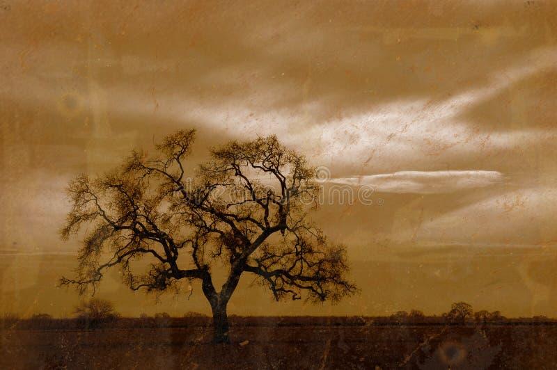 De Eiken Boom van de Winter van Grunge royalty-vrije stock afbeeldingen
