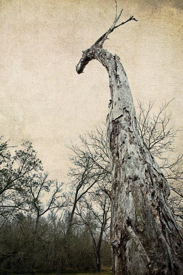 De Eiken Boom van Dragon Head Shaped Southern Live stock afbeeldingen