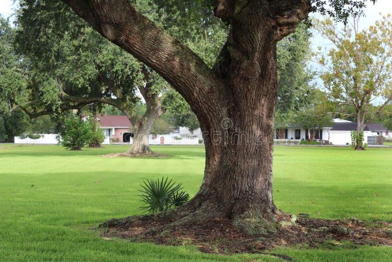 De Eiken Boom van Louisiane royalty-vrije stock foto