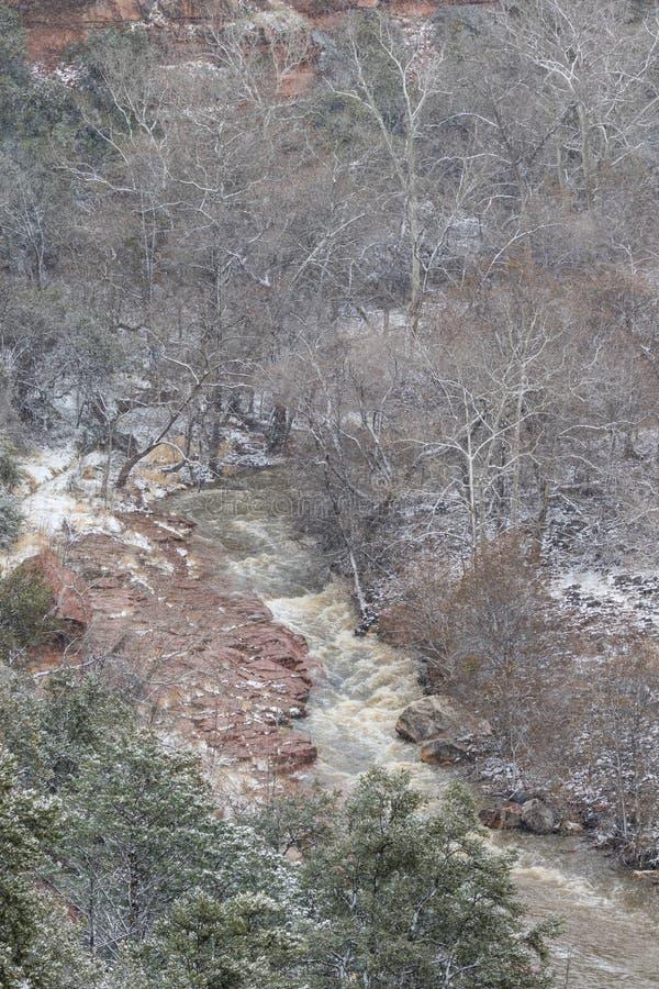 De eiken Sneeuw van de Kreekcanion stock foto