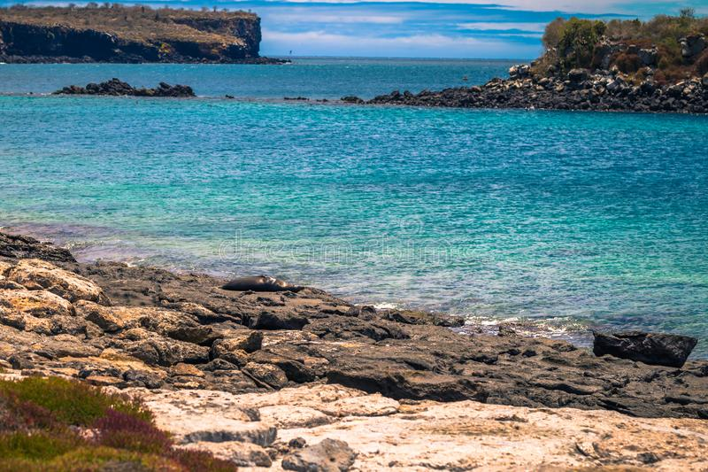 De Eilanden van de Galapagos - 24 Augustus, 2017: Zeeleeuw in het eiland van Pleinsur, de Eilanden van de Galapagos, Ecuador stock foto's