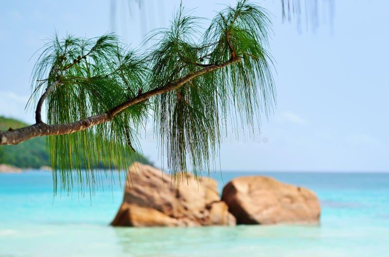 De eilanden van Seychellen, Praslin, Anse Lazio royalty-vrije stock afbeelding
