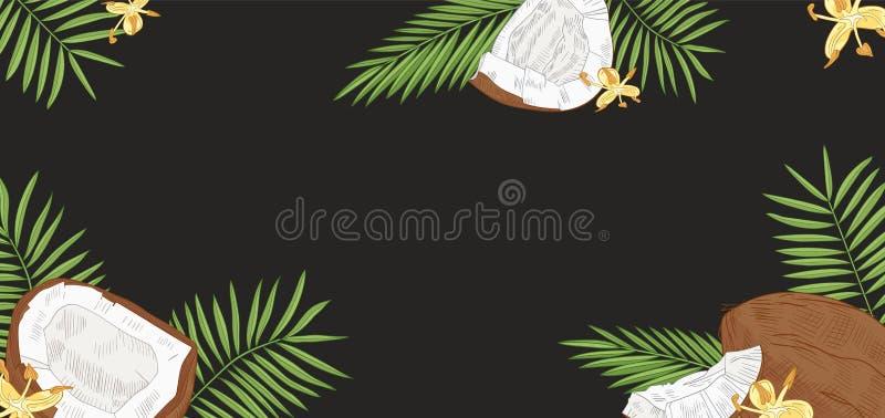 De elegante horizontale achtergrond met kokosnoten, palm gaat en bloeit op zwarte achtergrond weg Achtergrond met vers royalty-vrije illustratie