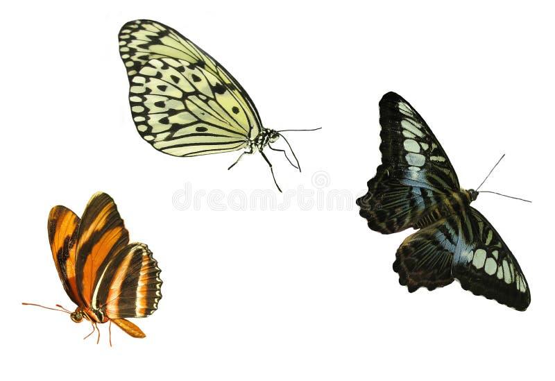 De elementen van de vlinder royalty-vrije stock afbeeldingen