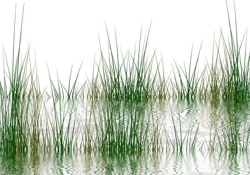 De elementen van het gras royalty-vrije illustratie