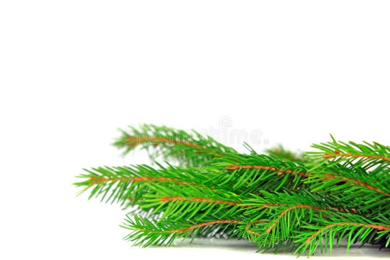 De elementen van het het kaderontwerp van de Kerstmisspar royalty-vrije stock afbeeldingen