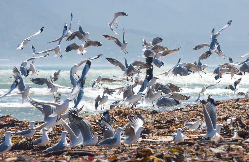 De Energie van de zeevogel stock foto's