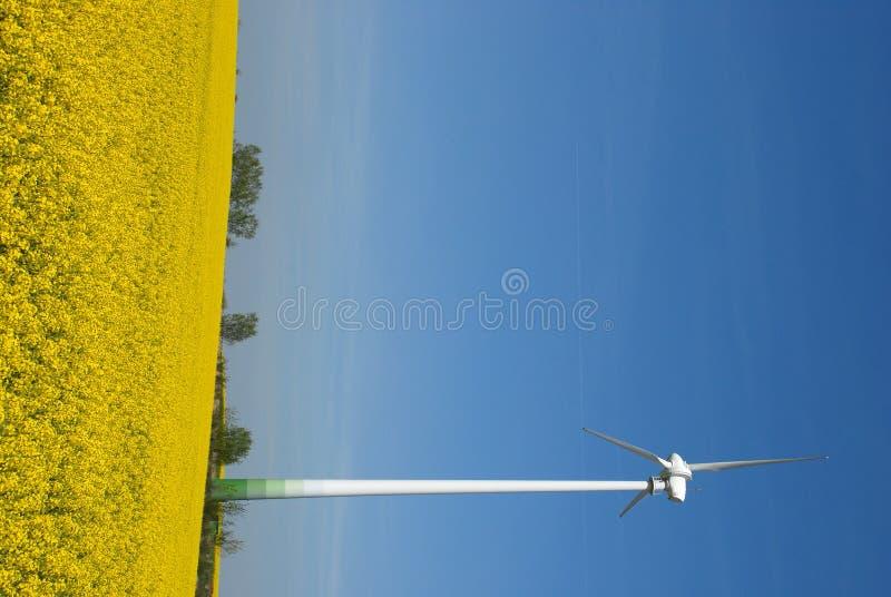 De energiemast van de wind op verkrachtingsgebied royalty-vrije stock afbeeldingen