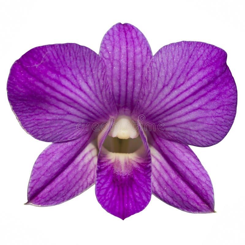 De enige purpere orchidee isoleert stock afbeeldingen