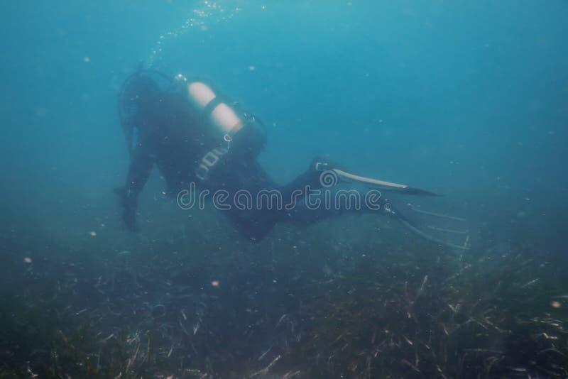 De Ertsader van scuba-duikerswimming underwater explores en onderzoekt Zeebedding royalty-vrije stock fotografie