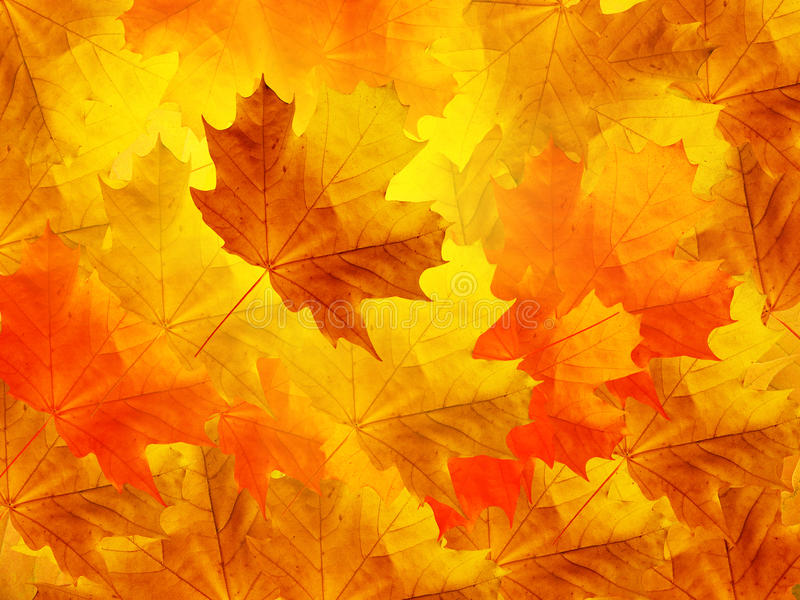 De esdoorn van bladeren royalty-vrije stock afbeeldingen