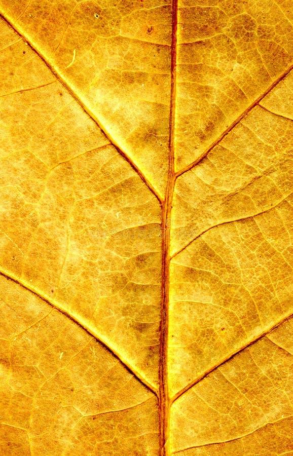 De esdoornblad van de herfst stock afbeeldingen