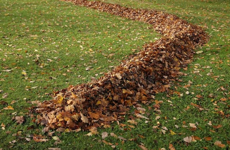 De esdoornblad van de herfst in een rij op groen gras stock fotografie