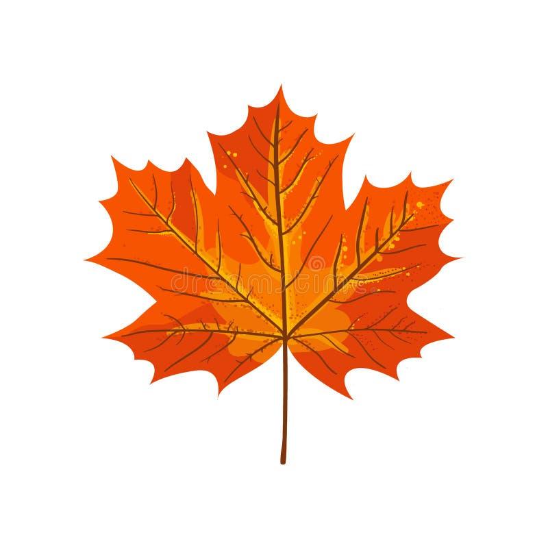 De esdoornblad van de herfst Het is geïsoleerdd royalty-vrije illustratie