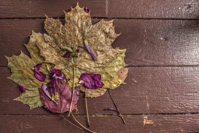 De esdoornbladeren en namen bloemblaadjes toe stock fotografie