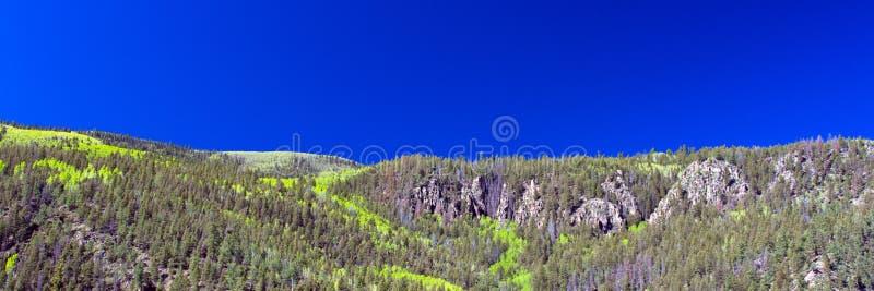 De espen die kleur in de lente draaien leiden tot interessante lijnen in de bergen langs de weg aan Creede in zuidelijk Colorado stock afbeeldingen