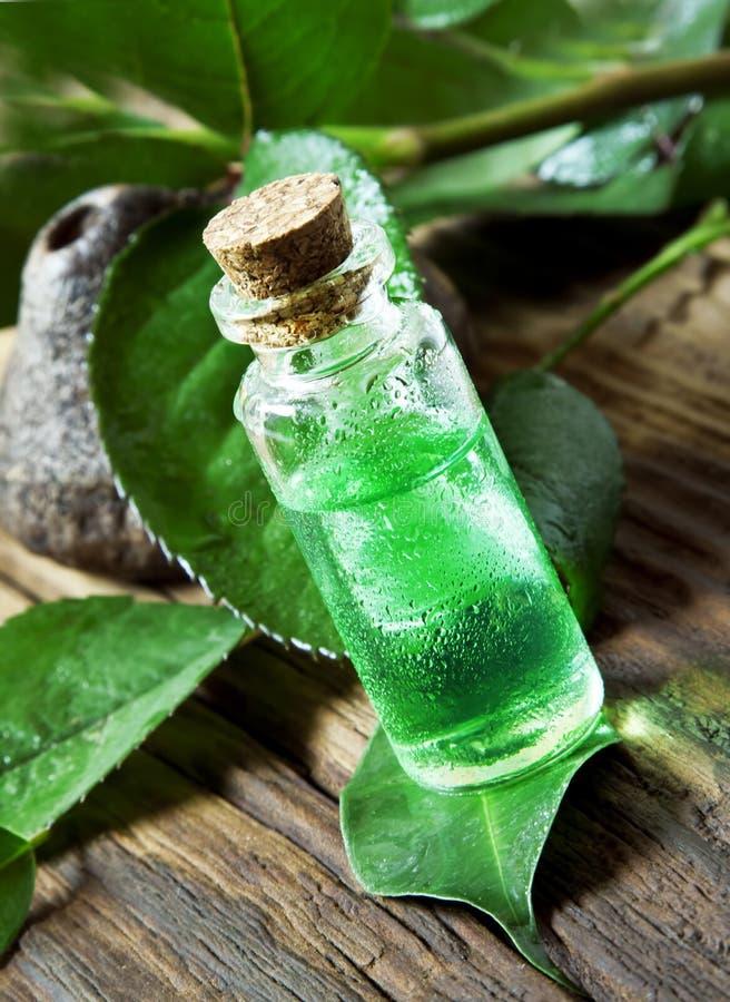 De Essentie van de etherische oliebottle.tea Boom stock foto