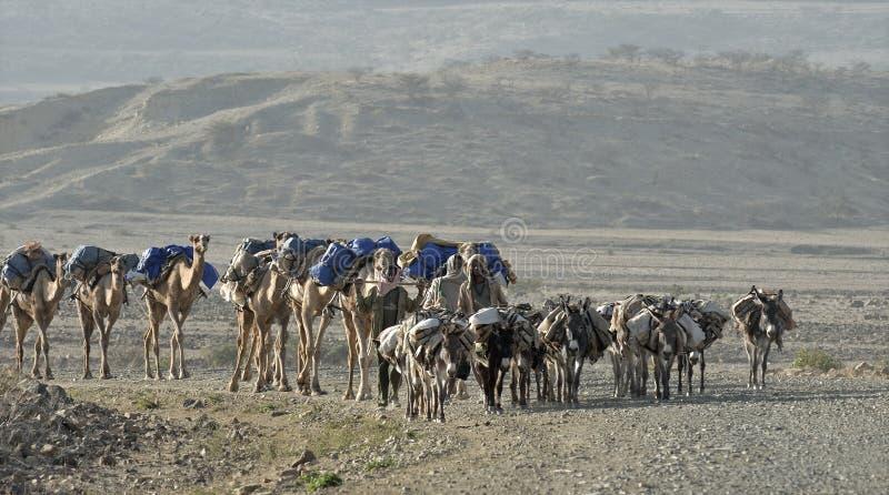 De Ethiopische Caravan van de Kameel stock afbeelding