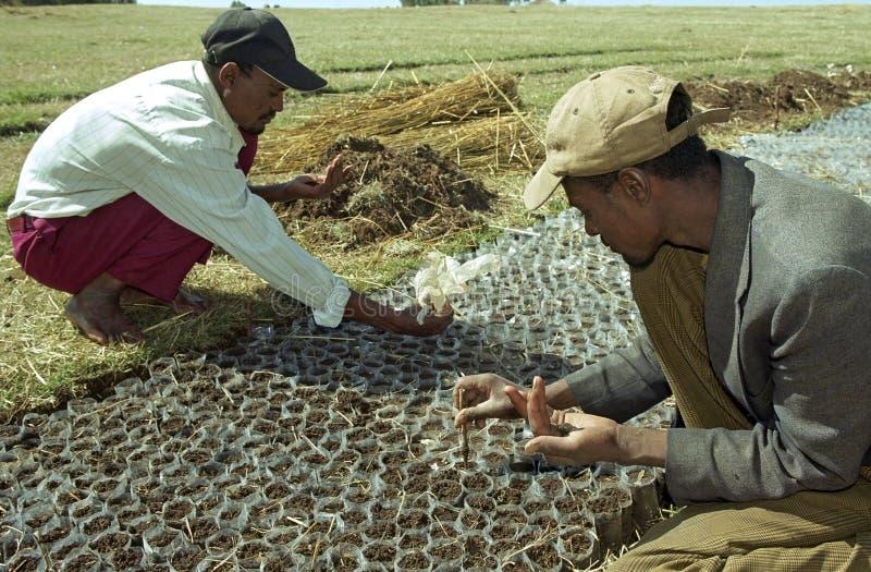 De Ethiopische mensen planten boomzaden in bosbouwproject stock fotografie