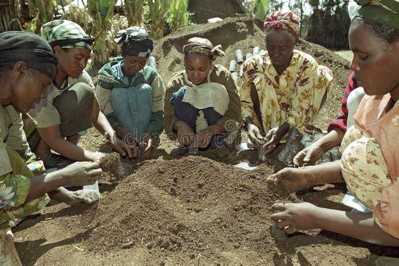 De Ethiopische vrouwen werken in herbebossingsproject royalty-vrije stock afbeelding