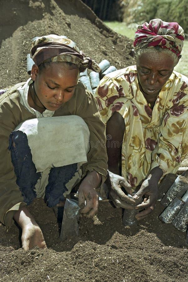 De Ethiopische vrouwen werken in herbebossingsproject royalty-vrije stock afbeeldingen