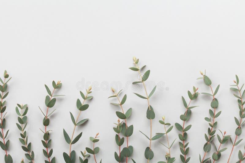 De eucalyptus verlaat grens hoogste mening vlak leg stijl stock afbeeldingen
