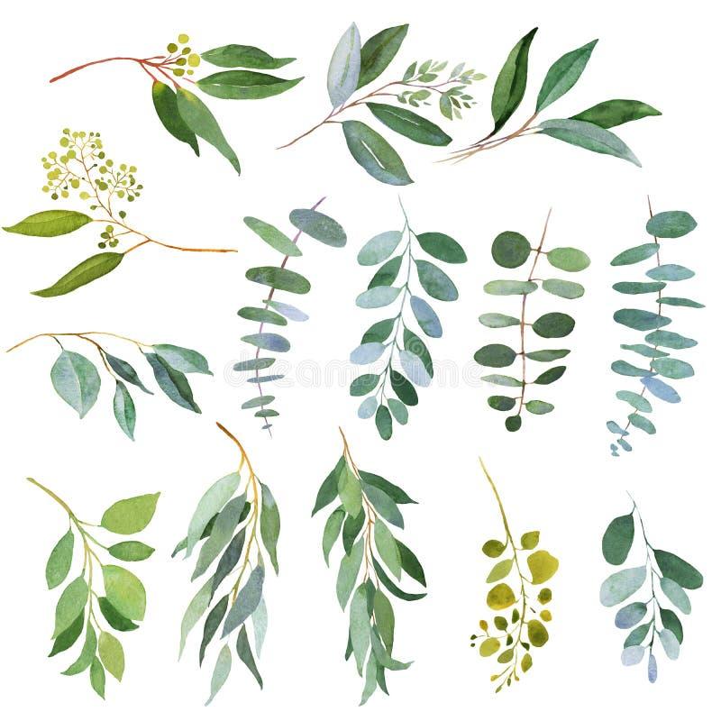 De Eucalyptustakjes van het huwelijksgroen De illustraties van de waterverf vector illustratie