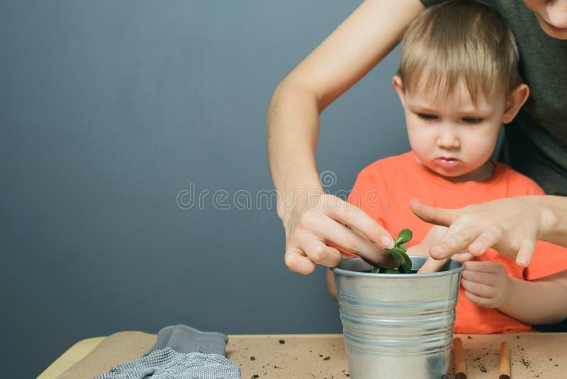 De Europese moeder en weinig blonde zoon planten de installatie van de geldboom in de pot van de metaalbloem op lijst opnieuw stock fotografie