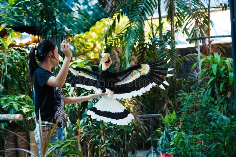 De excursie in het Aquarium en Tiger Zoo van Samui, toont van vogels royalty-vrije stock foto's
