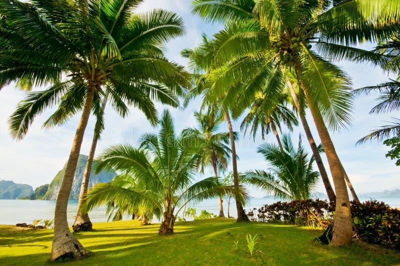 De exotische Palmen nemen Gronden zijn toevlucht royalty-vrije stock afbeelding