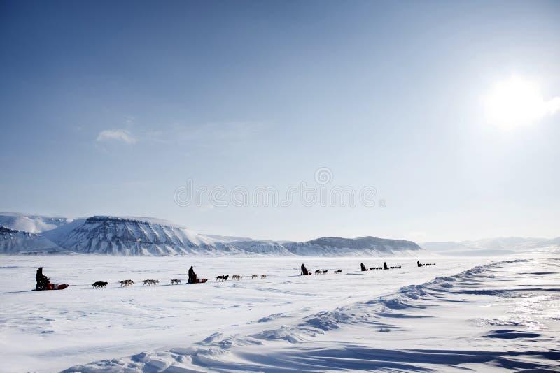De Expeditie van de Slee van de hond royalty-vrije stock afbeelding