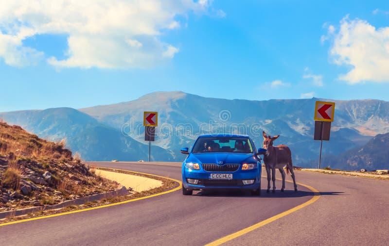 De ezel houdt auto voor tol tegen royalty-vrije stock foto's