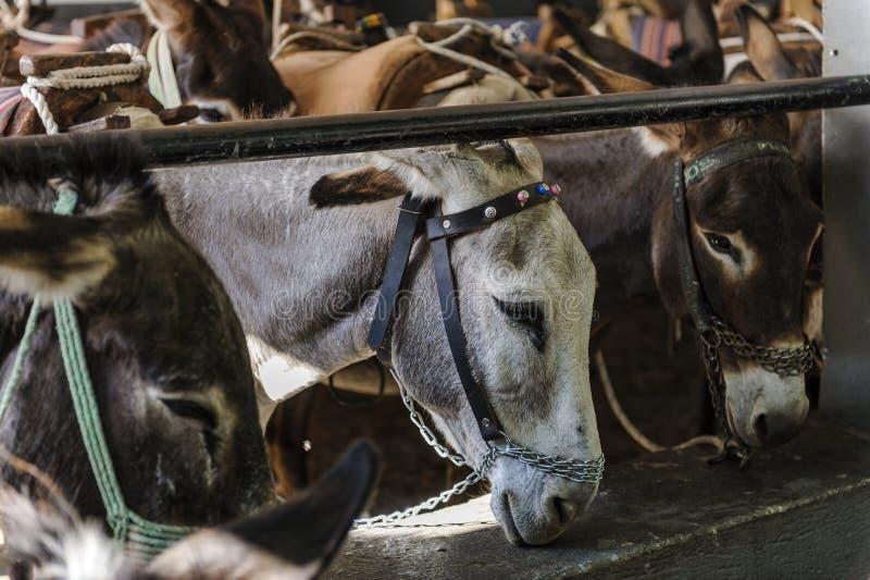De ezel in Lindos stock afbeelding