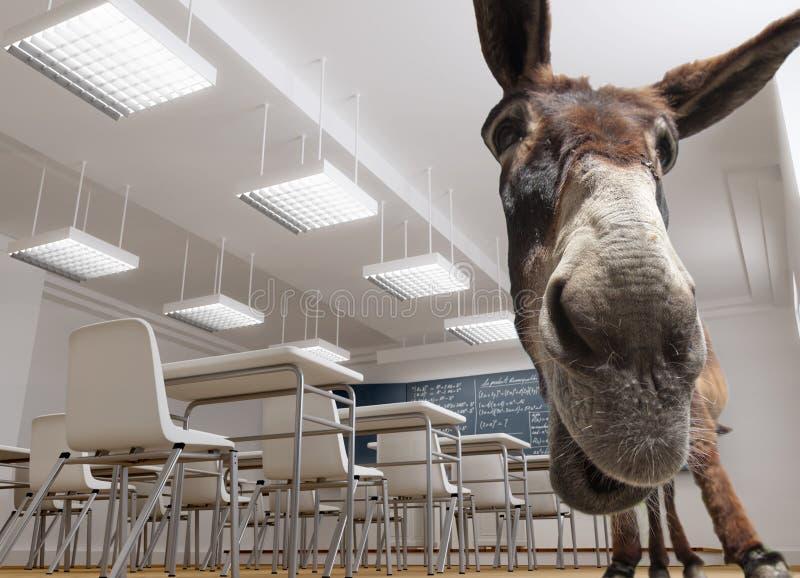 De ezel van het klaslokaal stock afbeeldingen