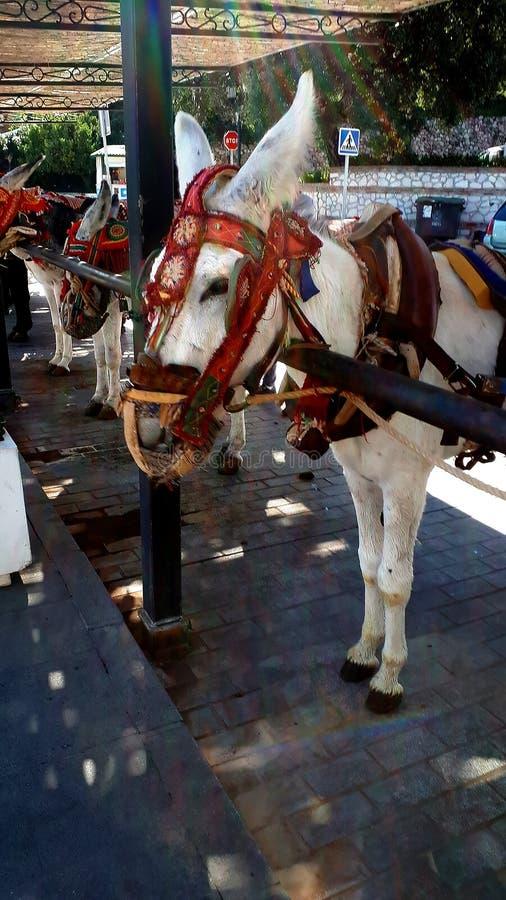 De Ezels van Mijas die één van de mooiste 'witte 'dorpen van het Zuidelijke gebied is van Spanje riepen Andalucia stock foto