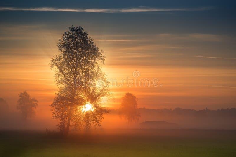 De första strålarna av solen bryter till och med filialerna av ett träd fotografering för bildbyråer