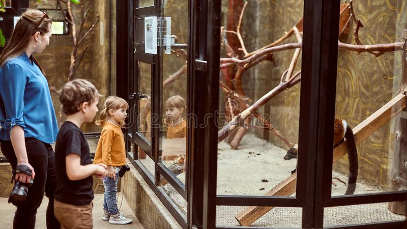 De familie bij de dierentuin bekijkt de dieren door een veiligheidsbril stock foto's