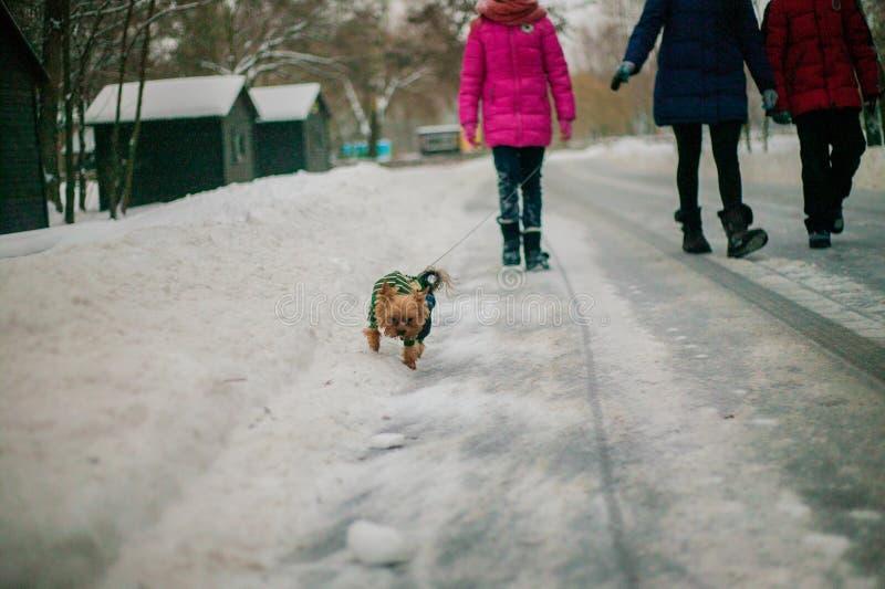 De familie met hond loopt in het park in de winter in de sneeuw De kinderen in hoeden genieten van aard, stellen en werpen sneeuw stock fotografie