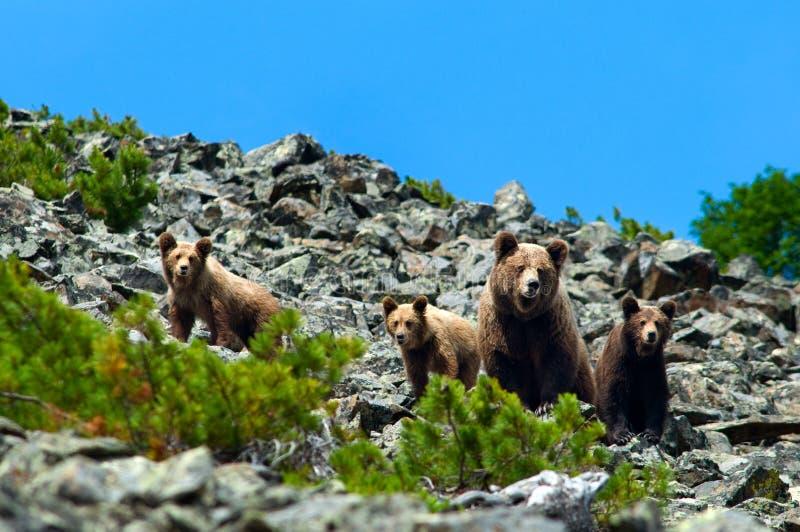 De familie van beren royalty-vrije stock afbeeldingen