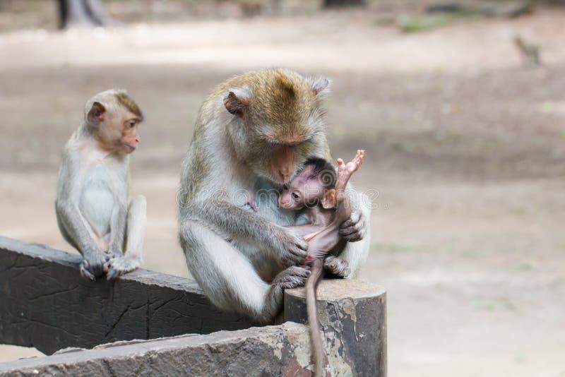 De familie van de aap royalty-vrije stock foto's