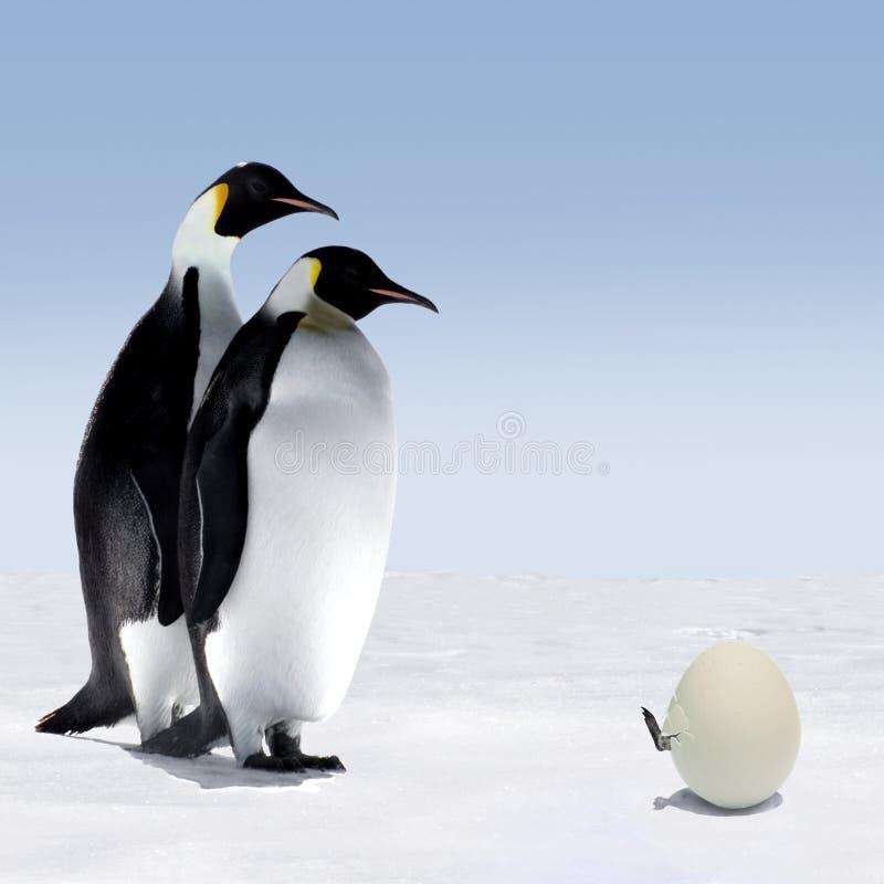 De Familie van de pinguïn stock fotografie