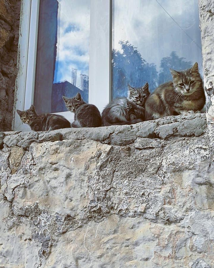 De familie van katten royalty-vrije stock foto's