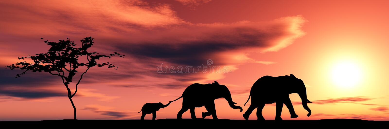 De familie van olifanten stock fotografie